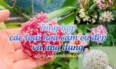 Tong Hop Lan Cam Cu Dep