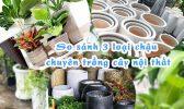 So Sanh 3 Loai Chau Chuyen Trong Cay Noi That