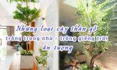 Nhung Loai Cay Than Go Trong Trong Nha