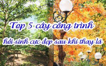 Top 5 Cay Cong Trinh Hoi Sinh Sau Khi Thay La