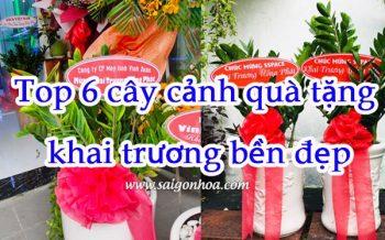 Top 6 Cay Canh Lam Qua Tang Khai Truong Ben Dep