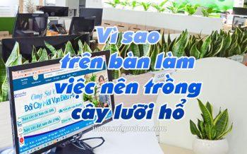 Trong Cay Luoi Ho Ban Lam Viec